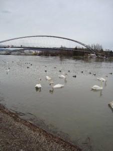 Sortie au bord du Rhin