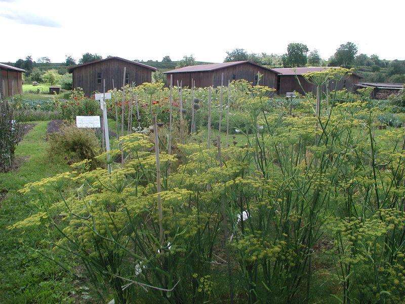 Samengarten