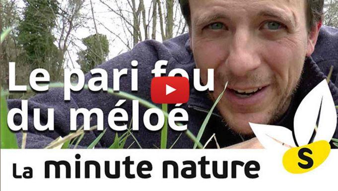 vidéos minute nature
