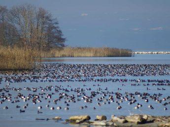 observation oiseaux hivernants